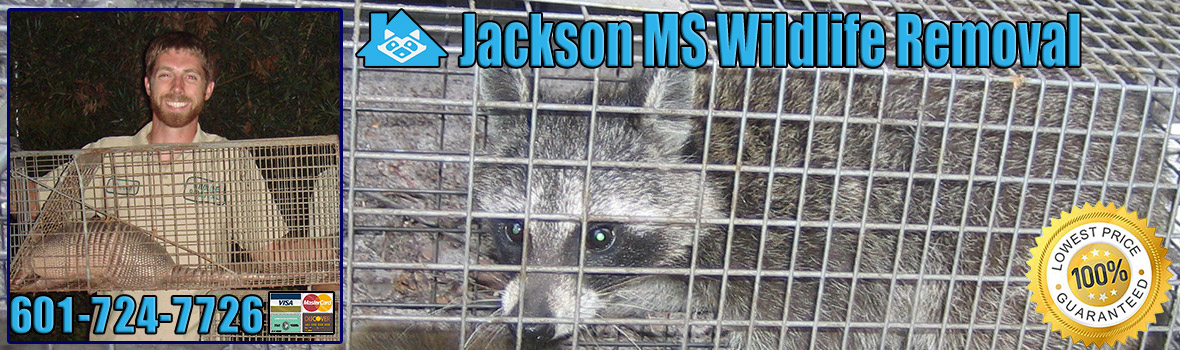 Jackson Wildlife and Animal Removal